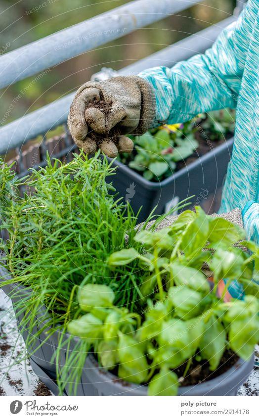 Balkon Pflanzen werden gepflanzt Natur Jugendliche Gesunde Ernährung Sommer Hand Lifestyle Leben Umwelt Senior Frühling Zufriedenheit Freizeit & Hobby Idylle