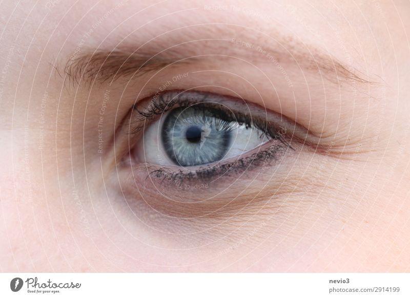 Blaues Auge Mensch feminin Junge Frau Jugendliche Erwachsene Gesicht 1 13-18 Jahre 18-30 Jahre blau Körperpflege Schönheitssalon Augenbraue intensiv geschminkt