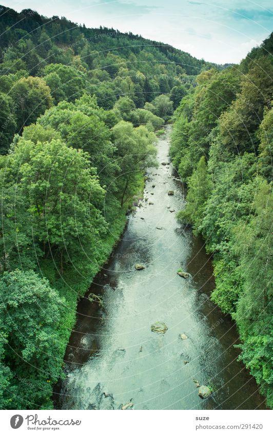 Die Trieb Sommer Umwelt Natur Landschaft Pflanze Urelemente Wasser Himmel Horizont Klima Schönes Wetter Baum Wald Fluss grün Idylle Vogtlandkreis Triebtal