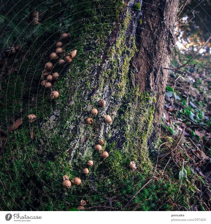 störfaktor | feindliche übernahme Natur Pflanze Baum Winter Umwelt Herbst Urelemente Macht einzigartig Netzwerk Ende Baumstamm Moos Pilz Zerstörung Wissen