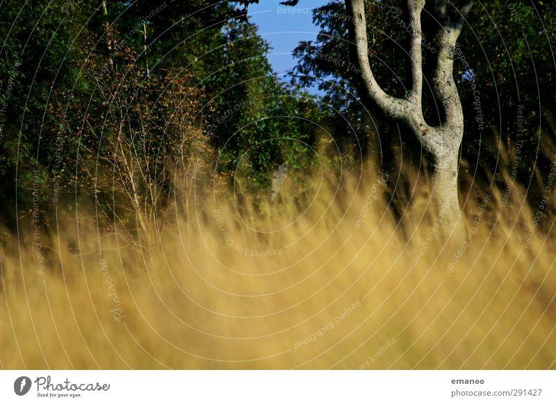 double U tree Umwelt Natur Landschaft Pflanze Sommer Klima Wetter Baum Gras Park Wiese Wald Urwald Wachstum natürlich gelb grün Buchstaben gekrümmt Astgabel
