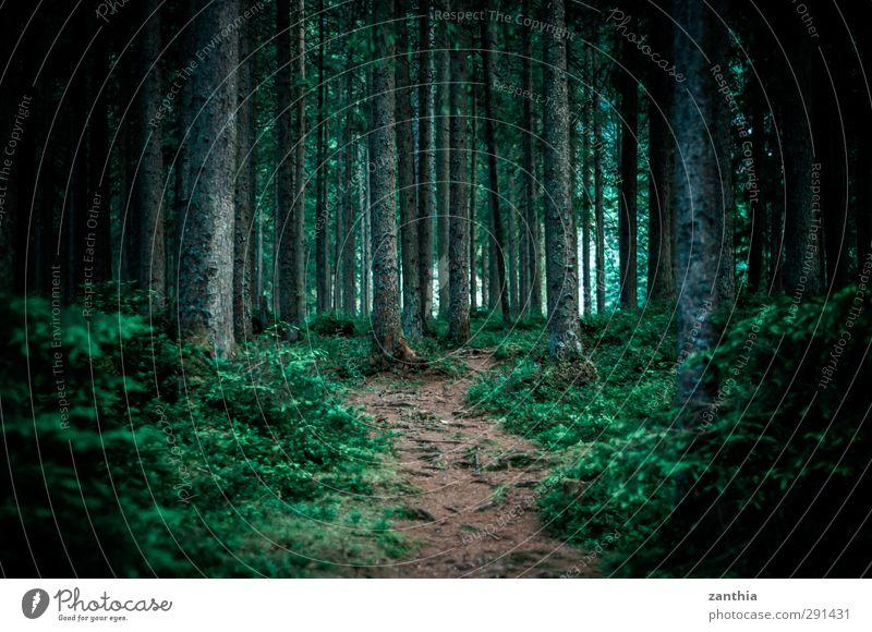 path Natur Sommer Einsamkeit ruhig Wald Ferne Umwelt dunkel Wege & Pfade Horizont Angst Idylle Beginn Fußweg Vertrauen entdecken