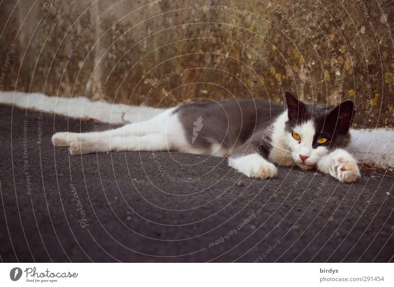 chilluot Mauer Wand Straße Katze 1 Tier Erholung liegen authentisch Originalität Gelassenheit Langeweile Zufriedenheit Straßenkatze Farbfoto Gedeckte Farben