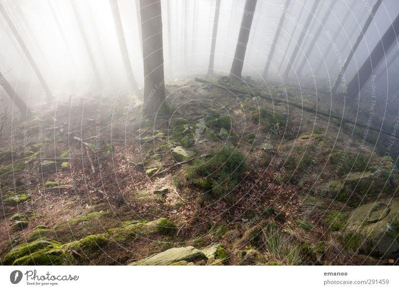 lichter Schwarzwald Ferien & Urlaub & Reisen Berge u. Gebirge wandern Umwelt Natur Landschaft Pflanze Himmel Sonne Herbst Klima Wetter Nebel Baum Moos Wald