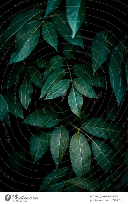 Natur Sommer Pflanze grün Blatt Winter Herbst Frühling Garten Dekoration & Verzierung frisch Beautyfotografie Konsistenz zerbrechlich geblümt