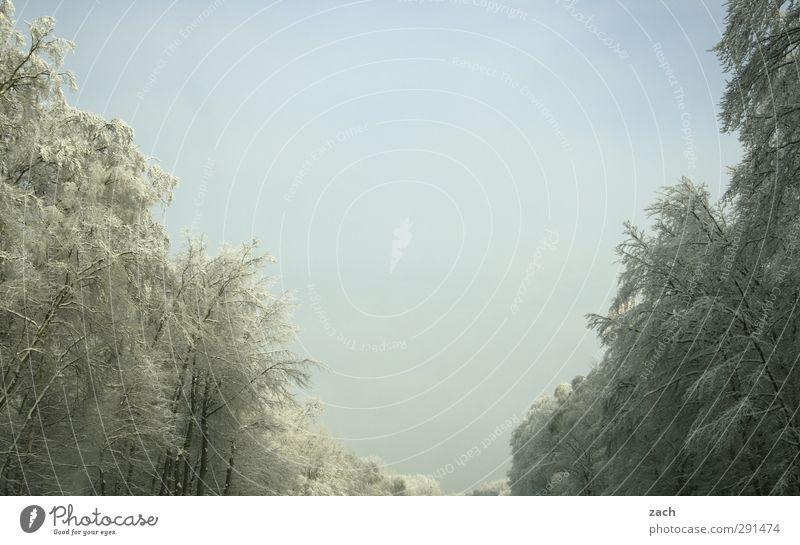 V wie VinterVonderland Winter Schnee Winterurlaub Umwelt Natur Landschaft Himmel Wolkenloser Himmel Schneefall Pflanze Baum Wald frieren kalt weiß