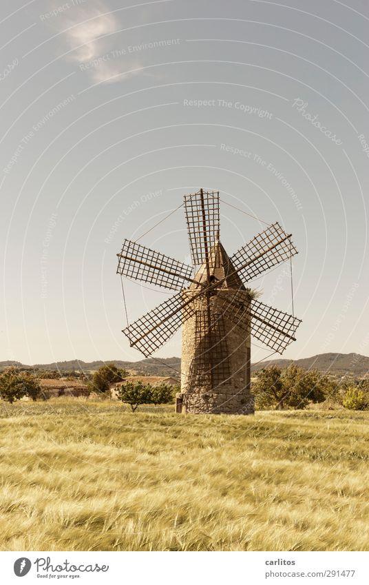 Noch 10 Wochen bis zur Sommerzeit Landschaft Pflanze Himmel Horizont Schönes Wetter Feld Bauwerk Fassade alt Windmühle Windmühlenflügel Getreidefeld 6 Gitter