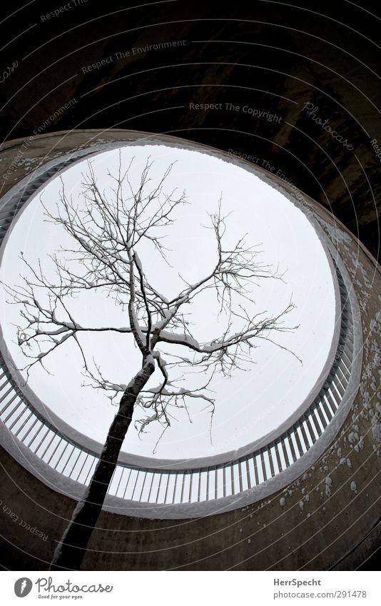 Lochbaum Himmel Winter schlechtes Wetter Schnee Schneefall Baum Gebäude Architektur grau schwarz weiß Aussparung kreisrund Brückengeländer Schneedecke Beton