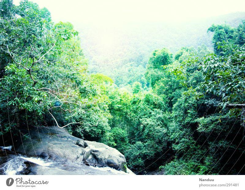 Into the Jungle Natur grün Landschaft hell Felsen Nebel Urwald Wasserfall Schlucht