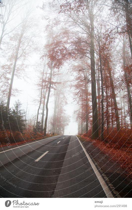 RED Umwelt Natur Landschaft Nebel Baum Wald kalt rot Straße Farbfoto Außenaufnahme Menschenleer Tag Weitwinkel