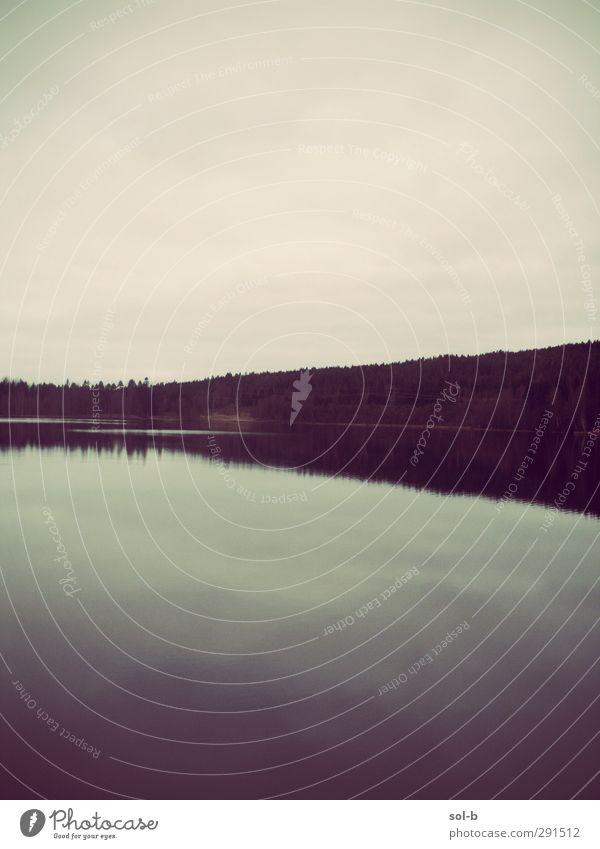 See, Oslo Natur Landschaft Wasser Wald dunkel natürlich blau grün Stimmung Gelassenheit Trauer Symmetrie ruhig Norwegen Traurigkeit Einsamkeit Gedeckte Farben