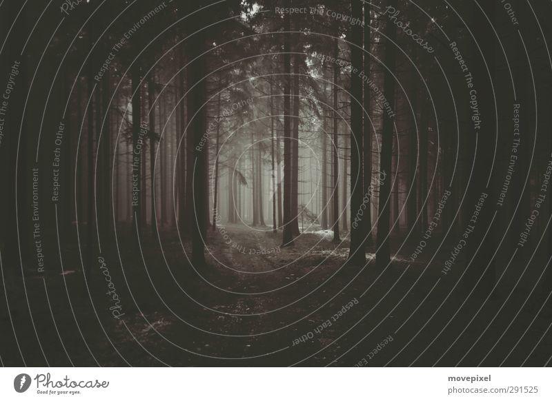 Nebel im Waldviertler Wald Winter Umwelt dunkel Herbst Wege & Pfade braun gruselig Außenaufnahme Monokultur