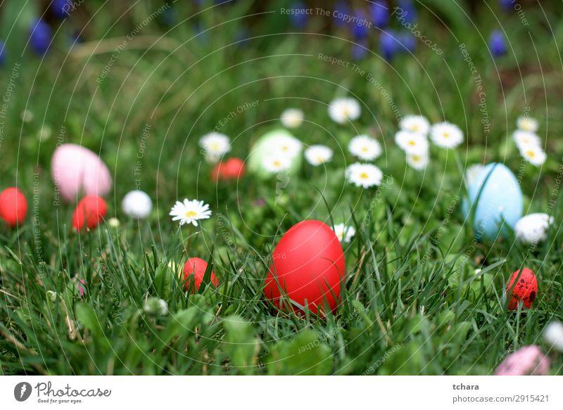 Osterjagd - rotes Ei im Gras Design schön Jagd Dekoration & Verzierung Feste & Feiern Ostern Menschengruppe Kultur Natur Landschaft Pflanze Himmel Blume Wiese