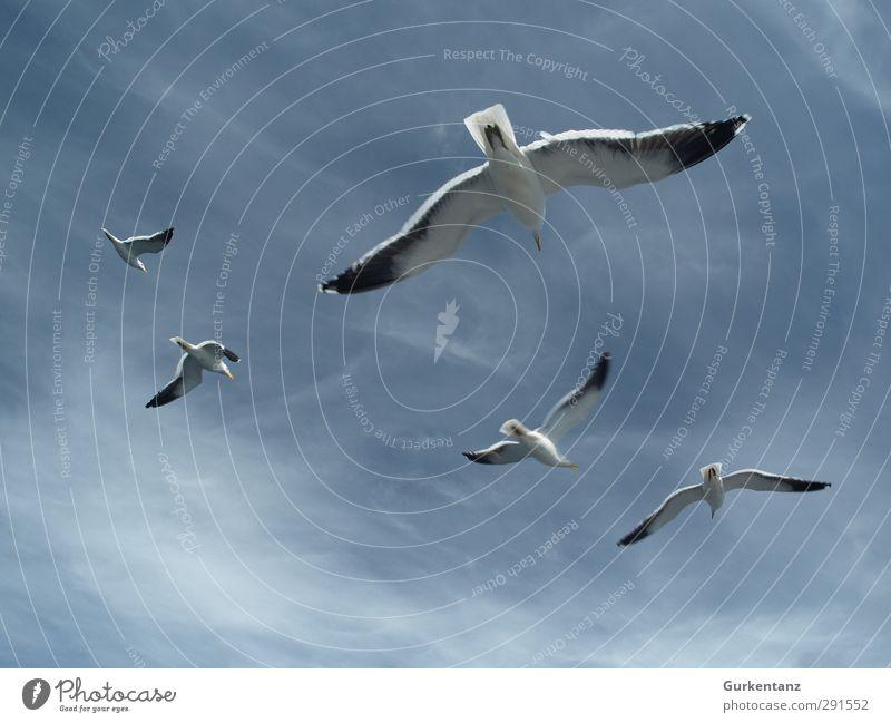 Möwengeschwader Vogel Tiergruppe fliegen Jagd Zusammensein blau Kraft Einigkeit loyal Freundschaft Tierliebe Flugangst Partnerschaft Ordnung Geschwader