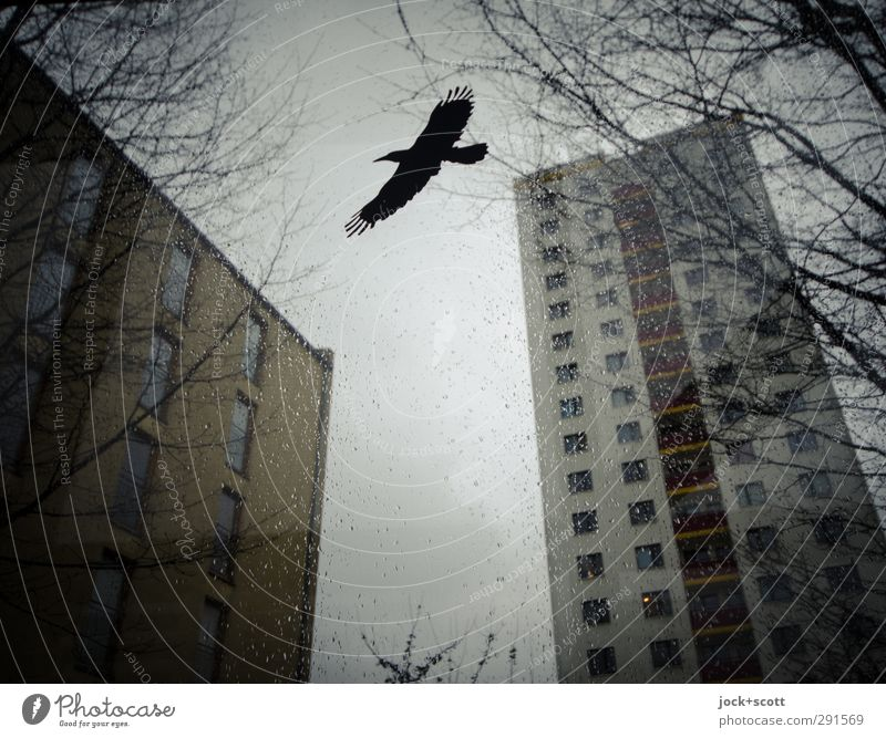 Warnvogel auf Mattscheibe umgeben von Plattenbauten Wassertropfen Himmel Winter Marzahn Wohnhochhaus Greifvogel 1 fliegen oben Stimmung kalt