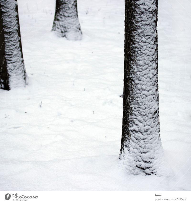 Toughe Typen Baum Winter Wald kalt Schnee Wandel & Veränderung Zusammenhalt verweht