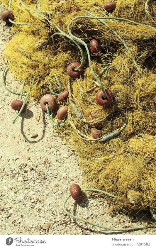 Maritime Angelegenheiten Meer Küste Essen Lebensmittel Ernährung bedrohlich Fisch Nordsee fangen Ostsee Angeln Mittagessen Festessen Fischereiwirtschaft Büffet