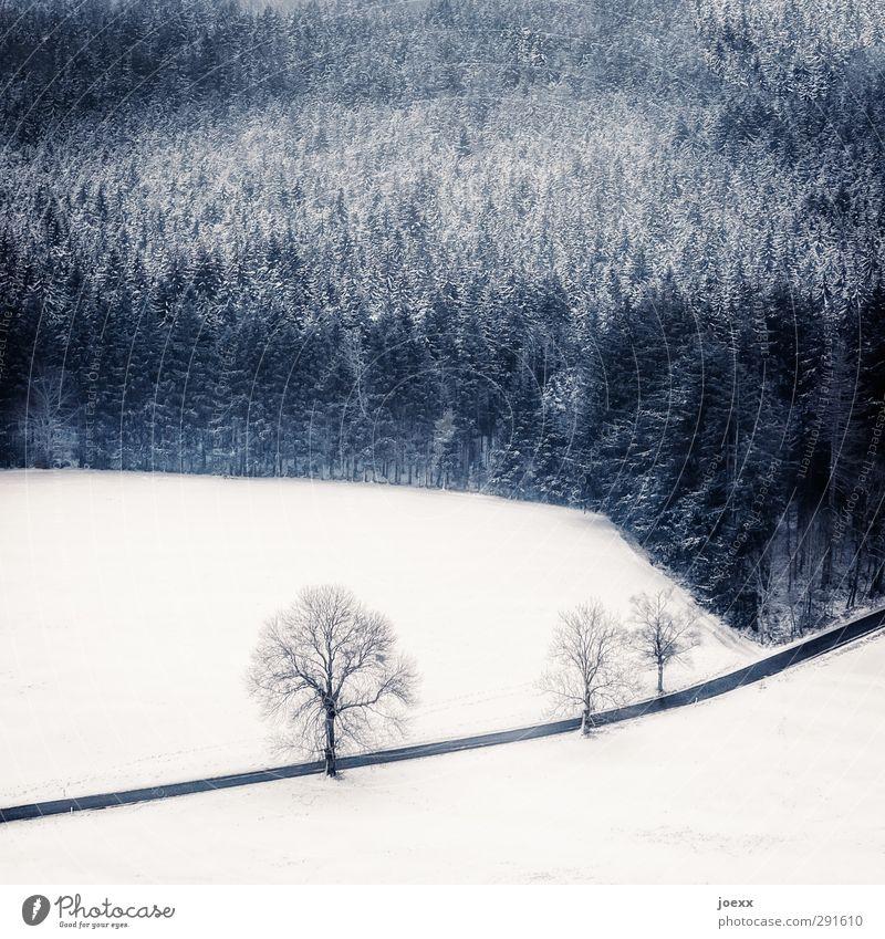 Extraordinär Landschaft Winter Wetter Schnee Baum Wald Straße hoch kalt blau schwarz weiß Wege & Pfade Farbfoto Gedeckte Farben Außenaufnahme Luftaufnahme