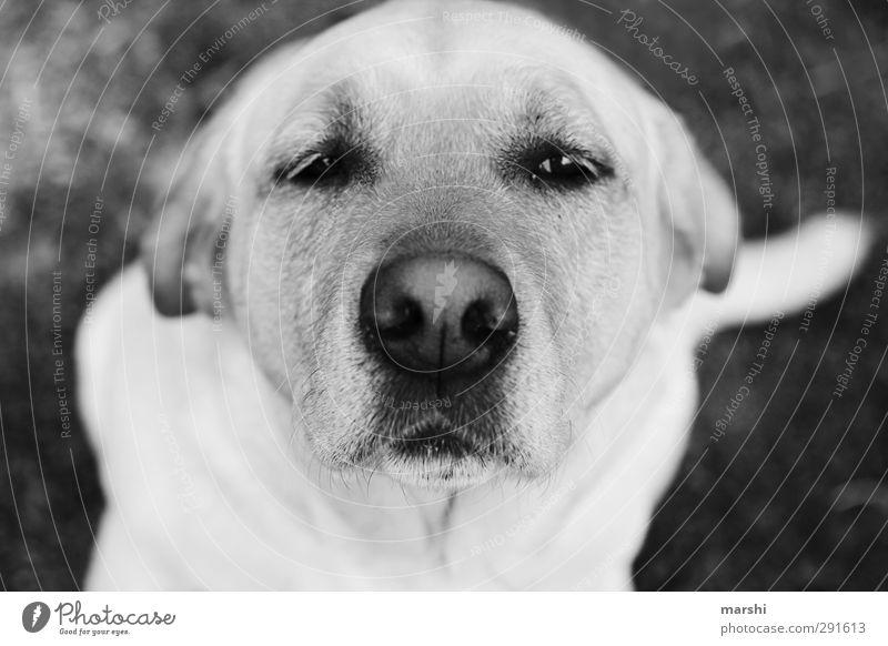Hundeblick schön weiß Tier schwarz Tiergesicht Haustier Schnauze Mischling