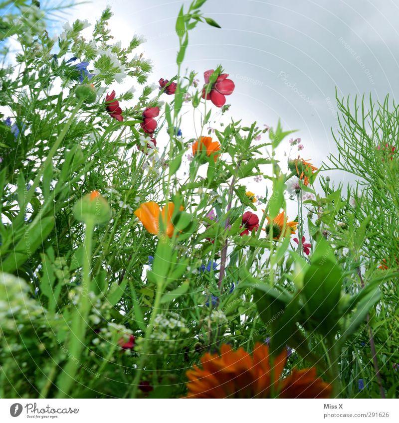 Wir brauchen mehr Sommer Natur Frühling Pflanze Blume Gras Blatt Blüte Garten Wiese Blühend Duft mehrfarbig Blumenwiese Wiesenblume Sommerblumen Winde