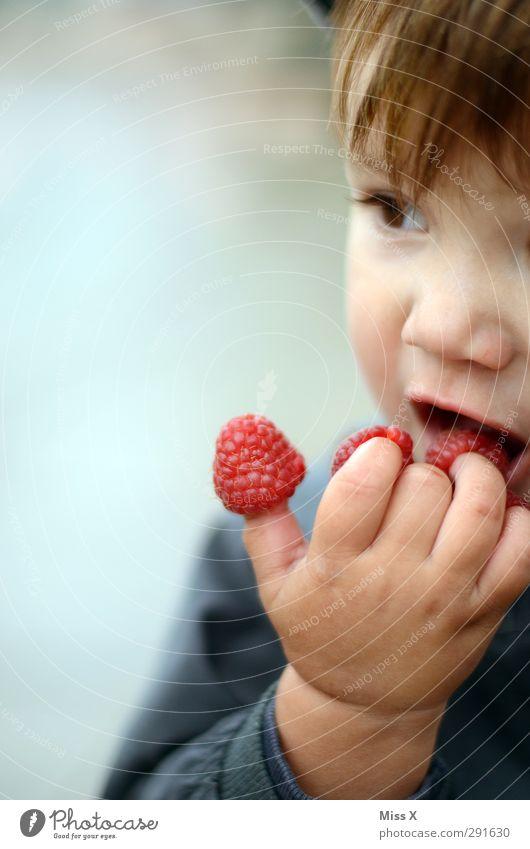 Loisl braucht mehr Sommer Lebensmittel Frucht Ernährung Essen Bioprodukte Mensch Kind Kleinkind 1 1-3 Jahre frisch lecker niedlich saftig süß rot Finger