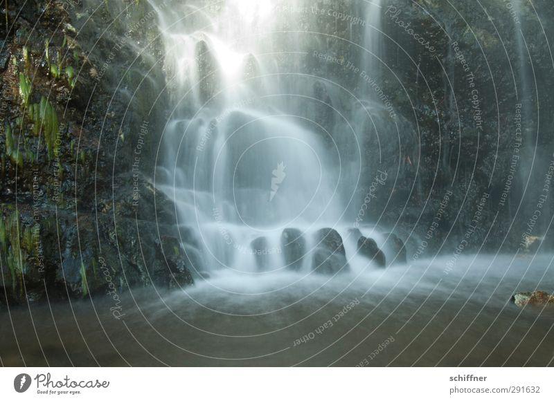 Wasservorhang Umwelt Natur Landschaft Pflanze Sonnenlicht Sträucher Farn Wald Felsen Bach Fluss Wasserfall schön Wildbach fließen fallen Felswand ruhig