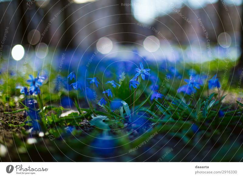 blaue Feder Stil Freude Leben harmonisch Freizeit & Hobby Ausflug Abenteuer Freiheit Sightseeing Sommer Sommerurlaub Natur Landschaft Pflanze Frühling