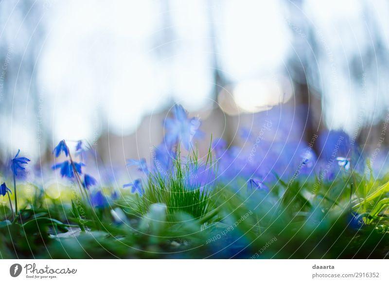 blaue Feder 2 Stil Freude Leben harmonisch Ausflug Abenteuer Freiheit Sommer Natur Landschaft Pflanze Frühling Schönes Wetter Blume Gras Park Wiese niedlich