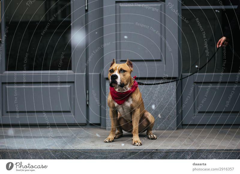 Schnee im Frühjahr - mit Hund 1 Lifestyle elegant Stil Freude Leben harmonisch Freizeit & Hobby Frühling Klimawandel Schönes Wetter Schneefall Stadt Mauer Wand