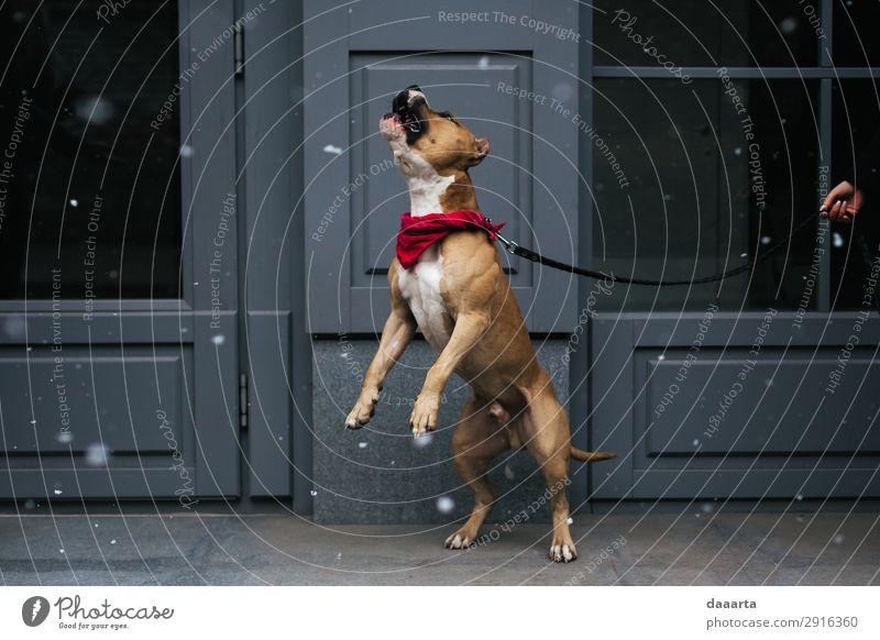 Schnee im Frühjahr - mit Hund 7 elegant Stil Freude Leben harmonisch Freizeit & Hobby Abenteuer Freiheit Tier Klimawandel Schönes Wetter Schneefall Mauer Wand