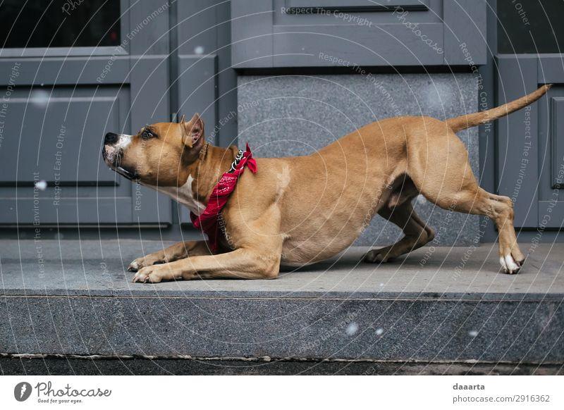 Hund schön Haus Tier Freude Leben Wand Schnee Feste & Feiern Stil Mauer Freiheit Fassade Schneefall Freizeit & Hobby elegant