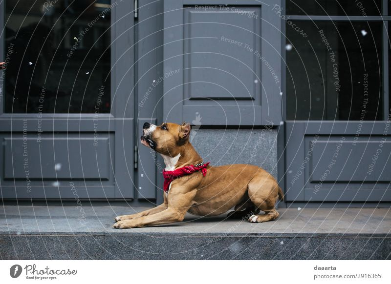 Schnee im Frühling - mit Hund 4 elegant Stil Freude Leben harmonisch Freizeit & Hobby Abenteuer Freiheit Haus Klimawandel Schönes Wetter Mauer Wand Fassade