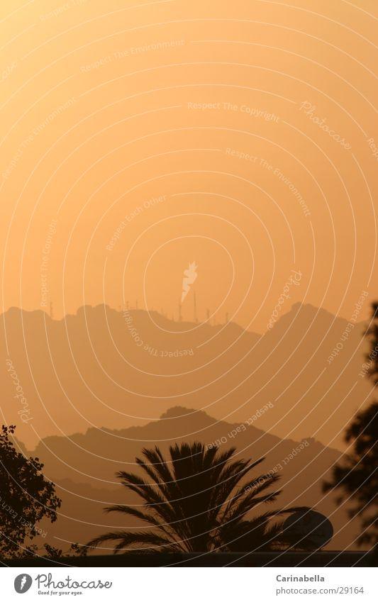 Abendstimmung Sardinien Palme Sonnenuntergang Hügel Olbia Berge u. Gebirge Nebel orange