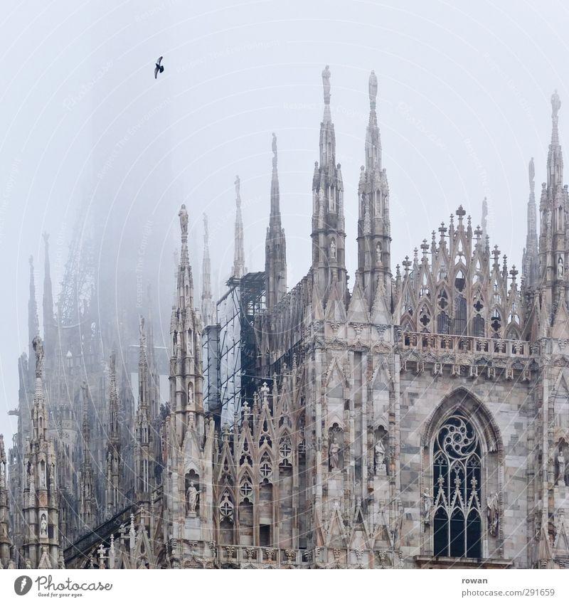 Domvogel dunkel kalt Architektur Religion & Glaube Gebäude Vogel außergewöhnlich fliegen Fassade Nebel hoch Kirche trist Dach Spitze Kultur