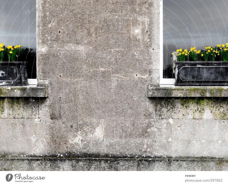 fruehlingsfassade Frühling Pflanze Blume Haus Einfamilienhaus Bauwerk Gebäude Architektur Mauer Wand Fassade Fenster alt dunkel kalt trist grau Hoffnung schäbig