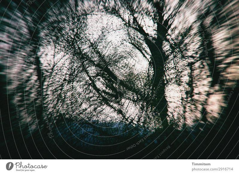 Geheimnisvolle Baumwelt Umwelt Natur Pflanze Himmel Herbst Winter Wetter Park Wald blau grün schwarz weiß Gefühle Irritation Doppelbelichtung träumen Farbfoto