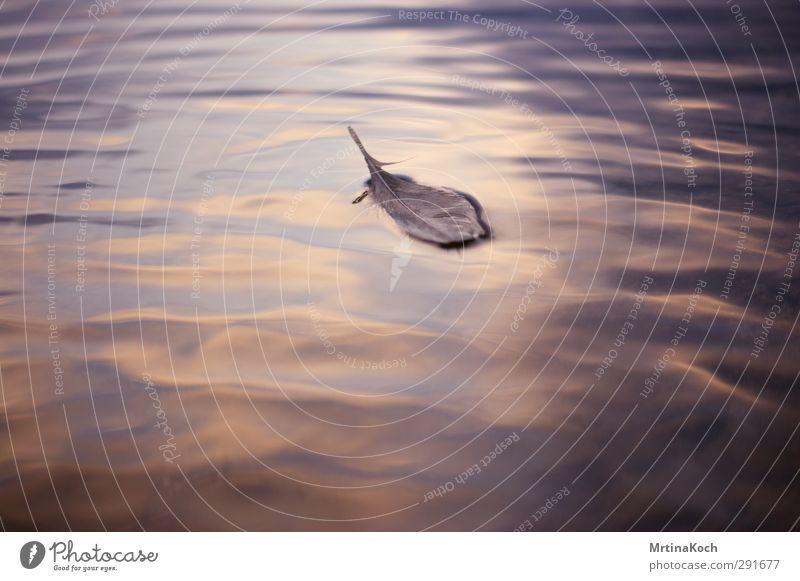 fragile. Himmel Natur Wasser Sommer Wolken Umwelt Herbst Frühling Küste See Schwimmen & Baden Vogel Wellen frisch Feder Wassertropfen