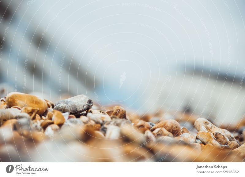Steine am Strand Nahaufnahme Umwelt Natur Küste Seeufer Flussufer Meer Insel ästhetisch Brighton England Steinstrand Makroaufnahme Kieselstrand Kieselsteine