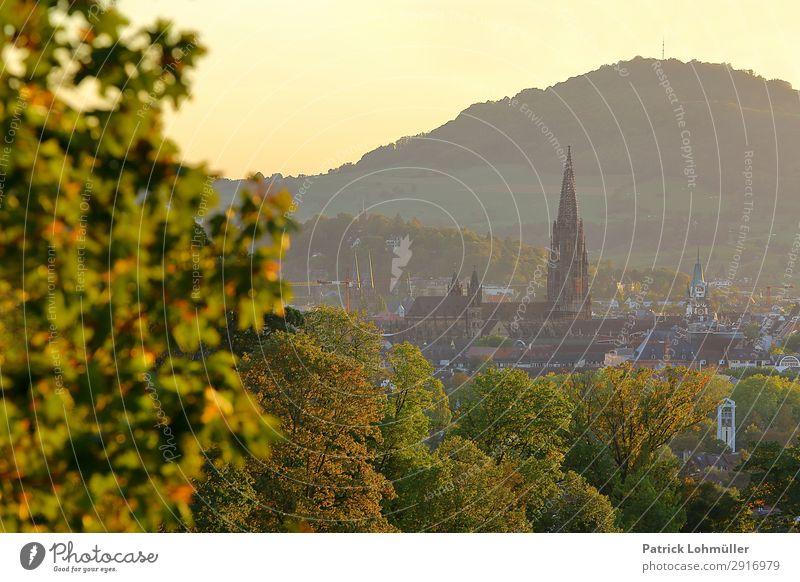 Freiburg im goldenen Oktober Tourismus Sightseeing Städtereise Umwelt Natur Landschaft Wolkenloser Himmel Herbst Schönes Wetter Baum Berge u. Gebirge