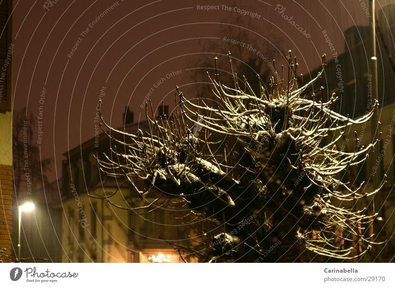 Schneeielet Baum Straßenbeleuchtung