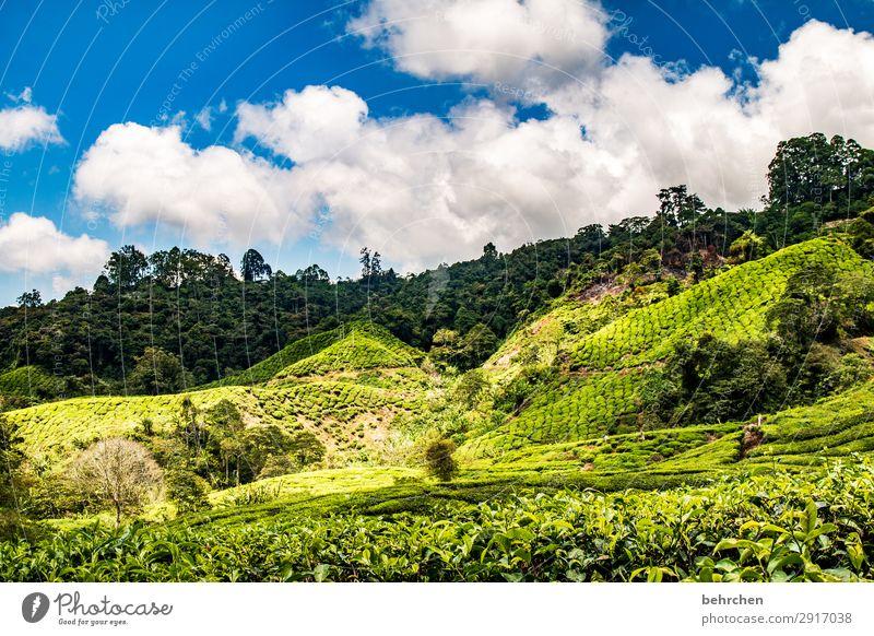 gute-nacht-tee Himmel Ferien & Urlaub & Reisen Natur Pflanze grün Landschaft Baum Wolken Blatt Ferne Berge u. Gebirge Umwelt Tourismus außergewöhnlich Freiheit