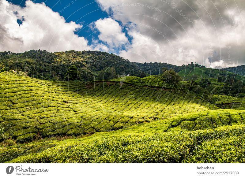 schatten und licht Ferien & Urlaub & Reisen Tourismus Ausflug Abenteuer Ferne Freiheit Natur Landschaft Himmel Wolken Pflanze Baum Sträucher Blatt Nutzpflanze