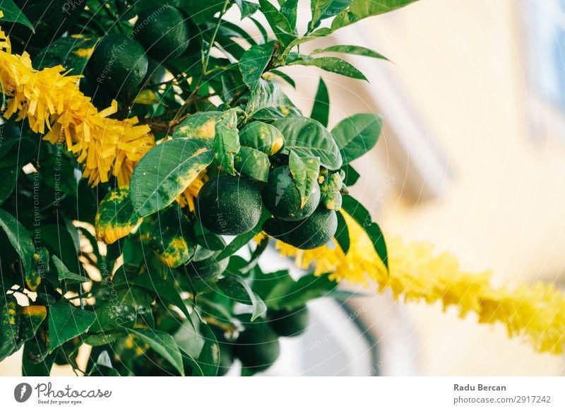 Grüne Zitrusfrüchte begrenzen Früchte in der Linde Landwirtschaft Hintergrundbild Beautyfotografie Blume Blüte Ast Haufen Nahaufnahme Farbe mehrfarbig Diät Feld