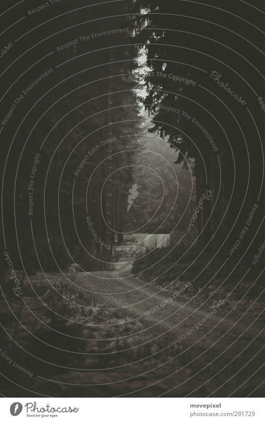 Lichtung Baum Wald dunkel Wege & Pfade Waldlichtung Forstweg