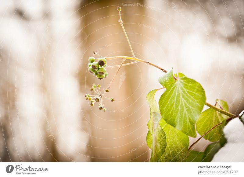 they have to be green Pflanze grün schön Wärme braun oben hell Wachstum frisch Kraft Erfolg Lebensfreude Schönes Wetter rund Freundlichkeit Neugier