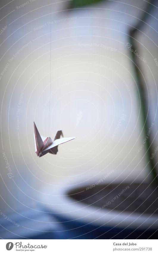 hanging around Häusliches Leben Wohnung Dekoration & Verzierung Raum Pflanze Grünpflanze Topfpflanze Vogel Papier Spielzeug Kitsch Krimskrams hängen schaukeln
