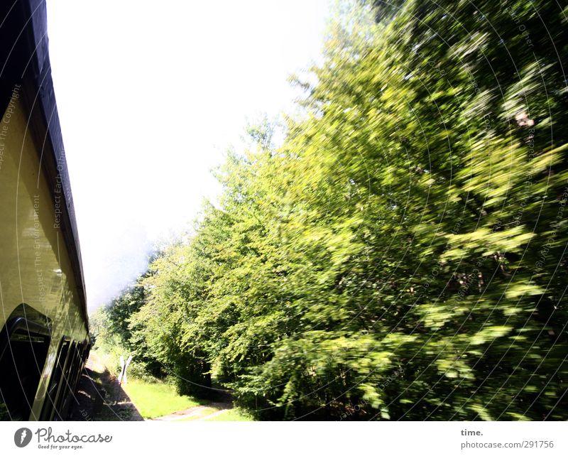 Molli Reloaded Baum Ferne Umwelt Wege & Pfade authentisch Verkehr Tourismus Schönes Wetter Geschwindigkeit Perspektive Eisenbahn fahren Lebensfreude historisch