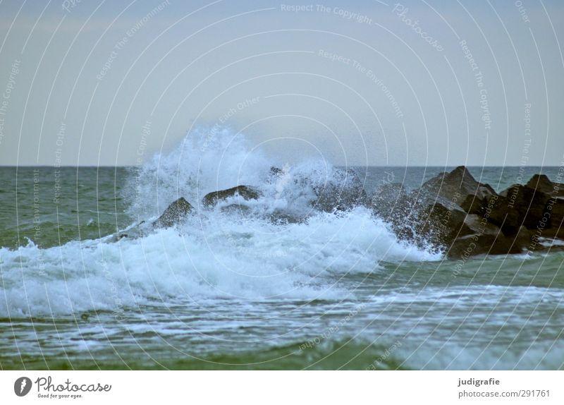Ostsee, kalt Umwelt Natur Landschaft Wasser Klima Wind Wellen Darß Flüssigkeit nass natürlich wild Bewegung Gischt Buhne Farbfoto Gedeckte Farben Außenaufnahme