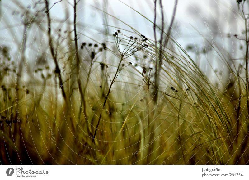 Wiese Natur Pflanze Strand Umwelt Wiese Wärme Gras Küste natürlich wild Wachstum weich Ostsee Wildpflanze
