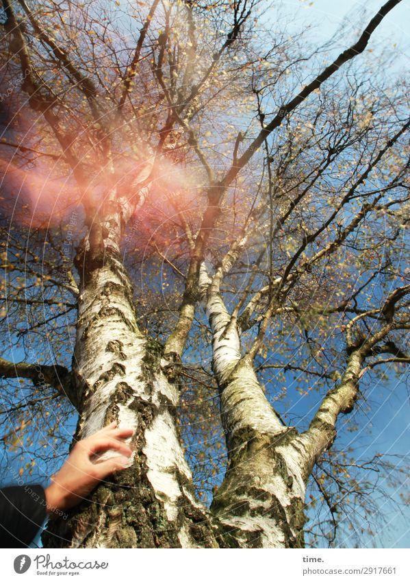 Testbild | heiße luft Himmel Natur Hand Baum Wald Holz Leben Herbst Umwelt natürlich Bewegung außergewöhnlich Linie träumen Kreativität Schönes Wetter